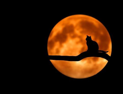 cat silhouette against full moon